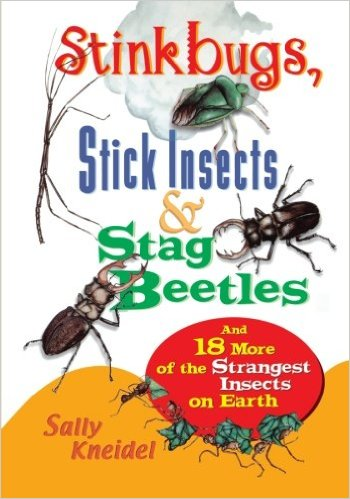 7 Image of Stink Bugs, Stick Insects and Stag Beetles